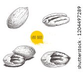 pecan nuts set. peeled core and ... | Shutterstock .eps vector #1204497289