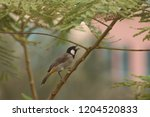 while this bird get thirsty.. | Shutterstock . vector #1204520833