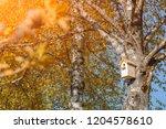 A birdhouse on a birch tree...