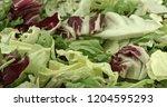 fresh green and red lettuce... | Shutterstock . vector #1204595293