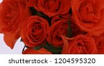 valentine's day roses close up. | Shutterstock . vector #1204595320