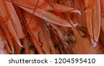 langoustines isolated on white... | Shutterstock . vector #1204595410