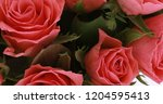 valentine's day roses close up. | Shutterstock . vector #1204595413