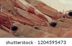 langoustines isolated on white... | Shutterstock . vector #1204595473