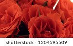 valentine's day roses close up. | Shutterstock . vector #1204595509