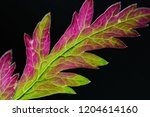 abstract foliage  green and... | Shutterstock . vector #1204614160