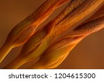 faded lily buds on an orange... | Shutterstock . vector #1204615300