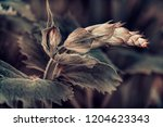 plant in the garden  the tip of ... | Shutterstock . vector #1204623343