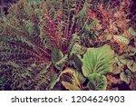 garden plants  abstract colors  ... | Shutterstock . vector #1204624903