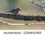 blue bird in a tree | Shutterstock . vector #1204642483