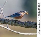 blue bird in a tree | Shutterstock . vector #1204642486