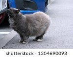 thick gray fluffy street cat... | Shutterstock . vector #1204690093
