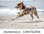 Stock photo dogs playing on the beach 1204762006
