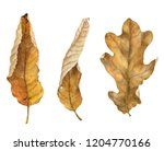 watercolor drawing dry autumn... | Shutterstock . vector #1204770166
