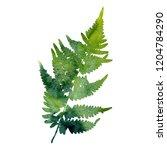 watercolor fern leaf silhouette ... | Shutterstock . vector #1204784290