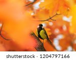 portrait of little beautiful... | Shutterstock . vector #1204797166
