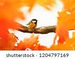 portrait of little beautiful... | Shutterstock . vector #1204797169