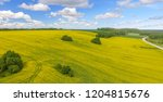 yellow meadows with trees and... | Shutterstock . vector #1204815676