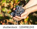 female winemaker is holding...   Shutterstock . vector #1204981243