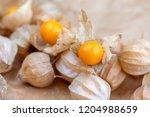 physalis peruviana edible tasty ... | Shutterstock . vector #1204988659