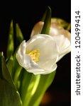 Bouquet Of Tulip In Vase Of
