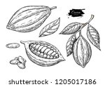 cocoa vector superfood drawing... | Shutterstock .eps vector #1205017186