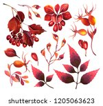 berries and leaves autumn red... | Shutterstock . vector #1205063623