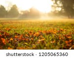 autumn leaves on the grass... | Shutterstock . vector #1205065360