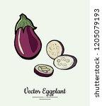 eggplant   hand drawn... | Shutterstock .eps vector #1205079193