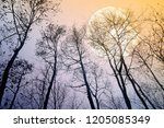 bare trees in evening with full ... | Shutterstock . vector #1205085349