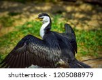 larger black and white bird... | Shutterstock . vector #1205088979