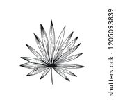 tropical leaf of chamaerops... | Shutterstock .eps vector #1205093839