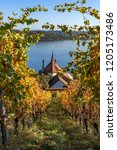 Pilgrim trail along an autumnal vineyard with a view of the lake - Pilgrim trail/Jakobsweg from Ligerz to La Neuveville - Autumn in Switzerland on Lake Biel