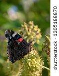 garden butterfly close up on... | Shutterstock . vector #1205188870