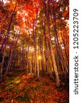 autumn landscape. uludag... | Shutterstock . vector #1205223709