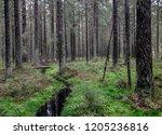 karelia mossy river stream...   Shutterstock . vector #1205236816