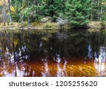 forest river water in autumn.... | Shutterstock . vector #1205255620