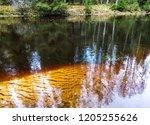 autumn forest river dark water...   Shutterstock . vector #1205255626