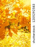 autumn. fall scene with falling ... | Shutterstock . vector #1205292583