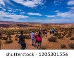 horseshoes bend  arizona  usa ... | Shutterstock . vector #1205301556