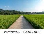 nature landscape image | Shutterstock . vector #1205325073