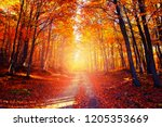 colored autumn forest path.... | Shutterstock . vector #1205353669