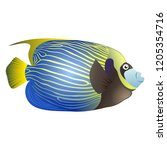 emperor angelfish on isolated... | Shutterstock .eps vector #1205354716