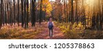woman hiking in forest at...   Shutterstock . vector #1205378863