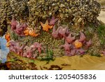 Starfish On Rock Outcropping At ...