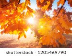 autumn background. yellow and... | Shutterstock . vector #1205469790