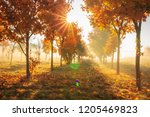vivid autumn nature with bright ... | Shutterstock . vector #1205469823