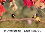 natural background with two... | Shutterstock . vector #1205480710