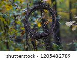 bird's nest on a tree in the... | Shutterstock . vector #1205482789