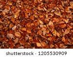 digital illustration of fallen...   Shutterstock . vector #1205530909